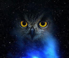 Wall Mural - Eyes eagle owl in the night sky