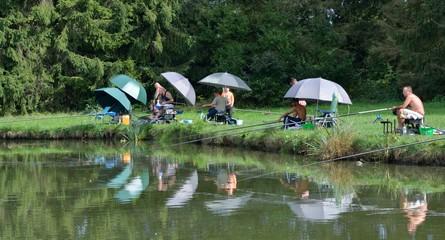 Pêcheurs de carpes sous leurs parasols alignés le long d'un étang