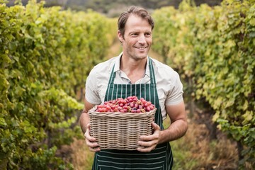 Happy winegrower holding a basket of grapes