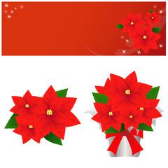 ポインセチア、クリスマス、冬、花、flower、