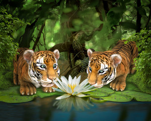 Two tigers sniffing lotus. Illustration