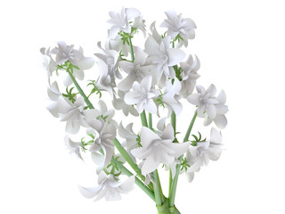 Bouquet of White Irises in 3D
