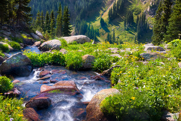 Boulder Creek Surrounded by Summer Wildflowers
