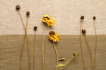 dried flowers on a background of beige fabric