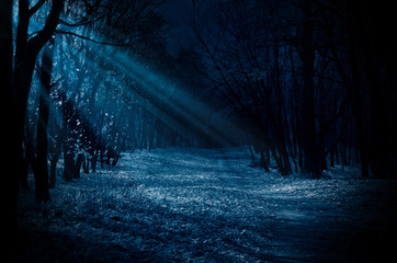 Fototapeten Wald Night forest