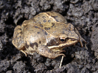 Image of frog