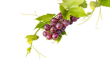 Bunch of red grapes and leaves against white background Fototapete