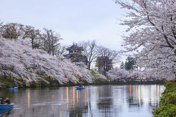 Light up of Takada Castle and Cherry blossoms, Niigata, Japan
