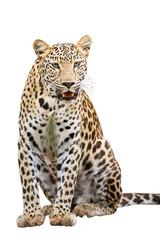 Canvas Prints Leopard Leopard