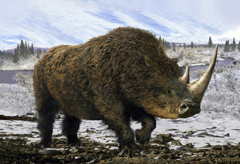 Woolly Rhinoceros/Collage representative of the Pleistocene - woolly rhinoceros in the background of the winter tundra.