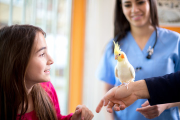 Girl with her nymph parrot in veterinary clinic