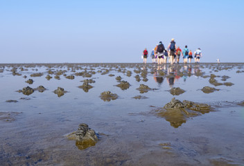 Wattwanderung im Wattenmeer mit Wattwurm