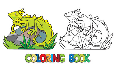Coloring book of little iguana