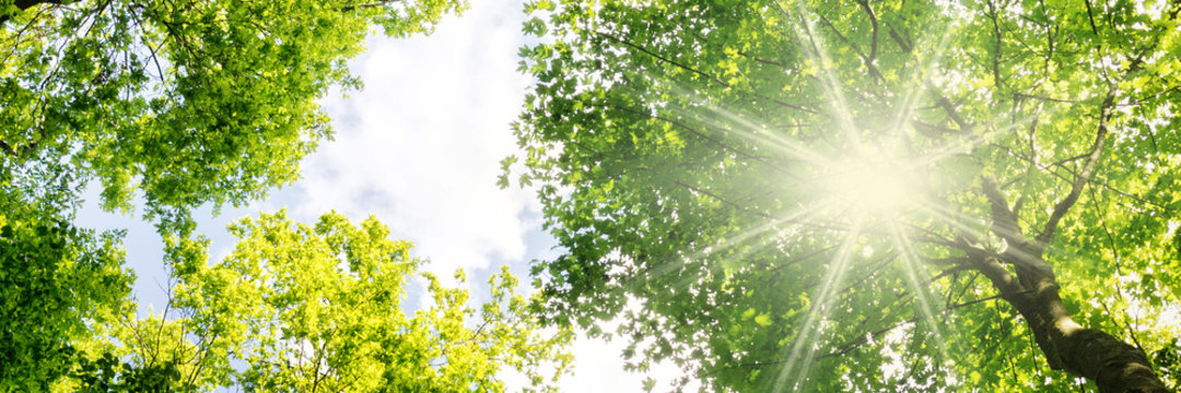 Warm rays of sunlight breaking through tree crowns in spring - banner