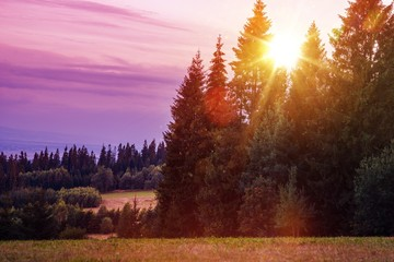Wall Mural - Scenic Forest Edge Sunset