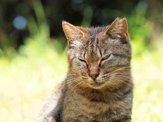 目つきの鋭い猫