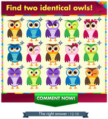 fiind two identical owls!