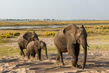Beautiful wildlife at Chobe National Park, Botswana