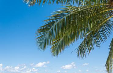 Green palm tree on blue sky
