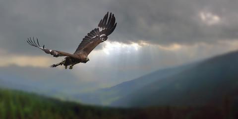 Adlerflug Fototapete