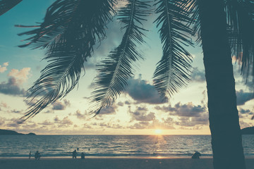 palm trees on the background of a beautiful sunset
