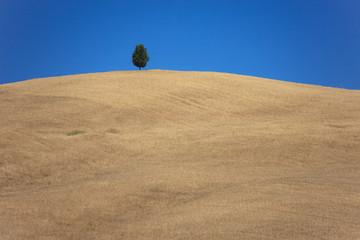 Val d'Orcia, albero solitario
