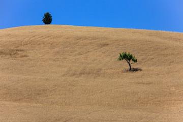 Val d'Orcia,due alberi isolati