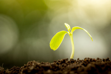 Young plant growing in soil on green bokeh background