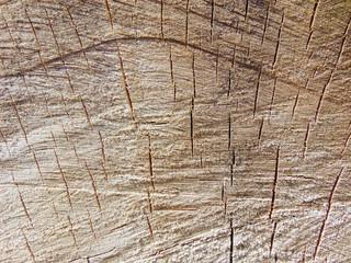 Fototapeta drewno obraz