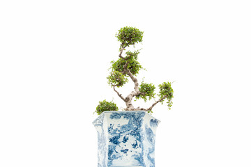 Collection of bonsai tree