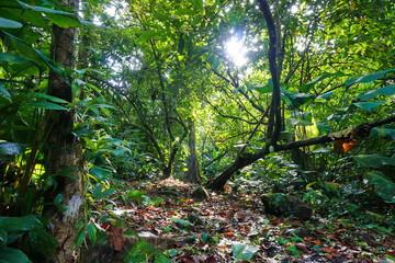 Path crossing the jungle natural light Costa Rica