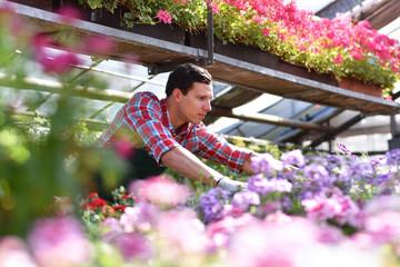 Gärtner in einem Gewächshaus mit bunten Blumen // Gardener in a greenhouse with colorful flowers