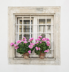 Square window with potted flowers