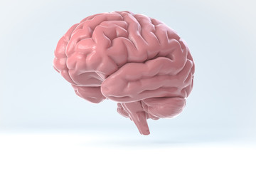 3D Human Brain Isolated Illustration. Science Anatomy Background.
