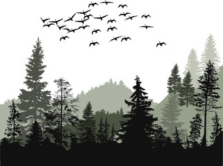 birds above fir trees forest isolated on white