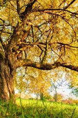 Autumn tree on meadow