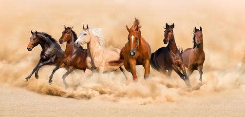 Fototapeta Horse herd run in desert sand storm