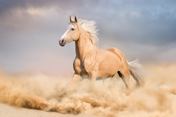 Palomino horse with long blond male run in desert