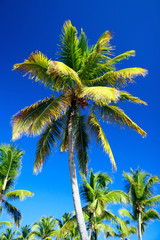 Top of palm on blue sky background