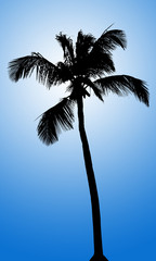 Silhouette of coconut palm tree on white background