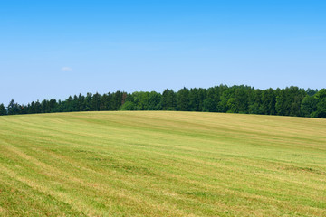 Acrylic Prints Village Mowed green grass field with forest behind