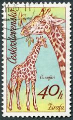 CZECHOSLOVAKIA - 1976: shows Giraffes