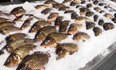 Fresh Mirror Carp fish laid out on the ice