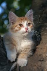 Kitten sitting in a tree