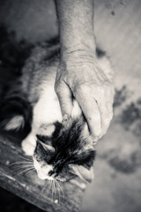 Closeup of very cute one gray cat in senior person hands