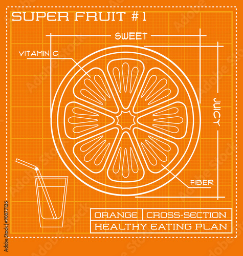 Blueprint Diagram Line Drawing Of Fruit Infographic Of An Orange