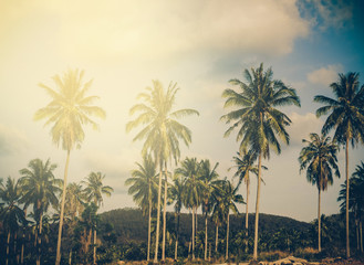 Coconut palm trees sunset. Instagram effect (vintage)