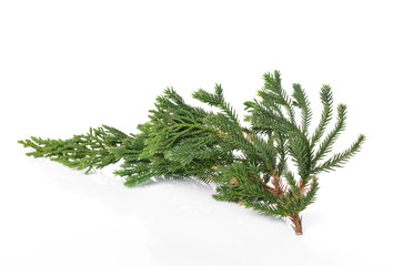 fir tree branch isolated on white background.