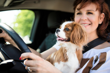 Woman and dog driving car