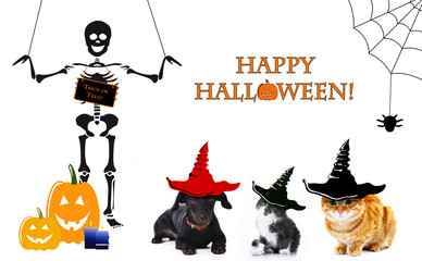 Animals with witch hats for halloween, isolated on white